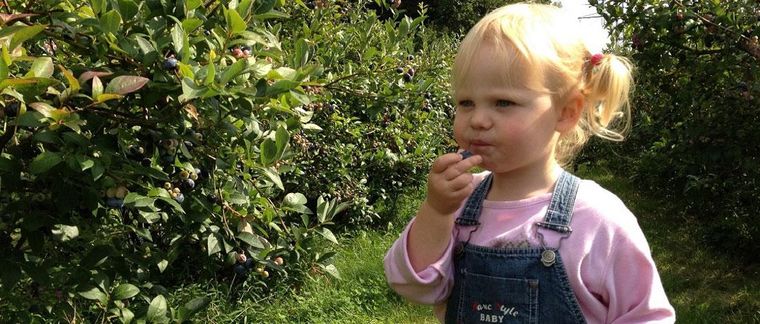 Müllers Heidelbeeren - Uelzen - selbst pflücken - Slider