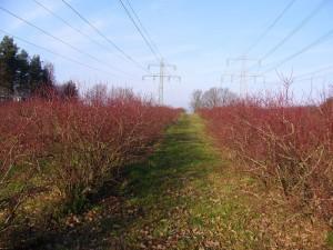 Herbst5 800