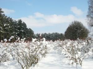 Winter1 640
