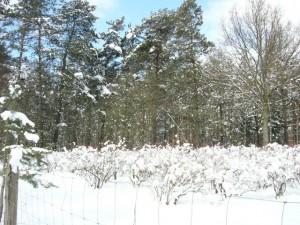 Winter2 640
